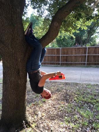 tree nerf